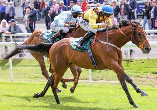 Saints & Sinners Racenight, Thursday 23 June